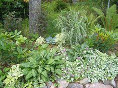 Perennapenkki varjokasveista (sivu:5)