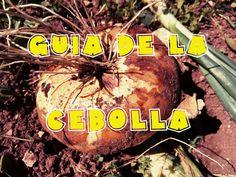 Guia del cultivo de la cebolla en el huerto