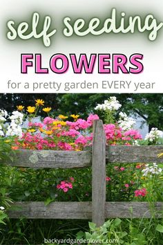 List Of Flowers, Annual Flowers, Flowers Perennials, Planting Flowers, Flowering Plants, Flower Gardening, Front Yard Flowers, Shade Landscaping, Landscaping With Flowers