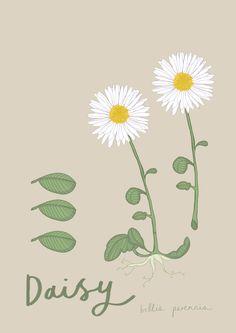 Daisy A4 Table Name Card