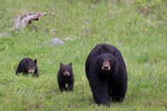 A marathoner ran between a bear and her cubs during a race in New Mexico. Find out how she survived—and what to do if it happens to you.
