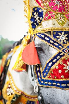 Embellished horse costume for the Baraat for an Indian wedding processional www.sweetwaterportraits.com