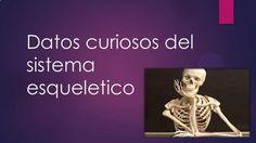 Datos curiosos del sistema esqueletico blog2