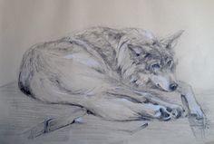 Dibujo a carbón graso de un lobo por Francisco Javier Abellán
