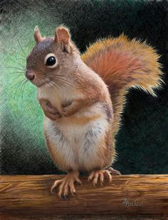 Squirrel colored-pencil drawing by Brent Ander