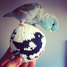 Flash the parrotlet by www.kristinepaulsen.com