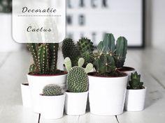 Wat zijn cactussen eigenlijk leuk! Ben je nog niet overtuigd? Bekijk dan deze post vol inspiratie!