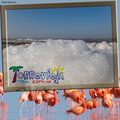 Parque natural de las Lagunas de La Mata y Torrevieja  La laguna de Torrevieja es una de las principales explotaciones salineras de España, con una media de extracción de 600.000 toneladas anuales. Una de las especies estrellas del parque es el flamenco, que llega a contar con 2.000 ejemplares durante la época de cría.