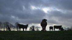 Der Preis der Milch - der Bauern Tod
