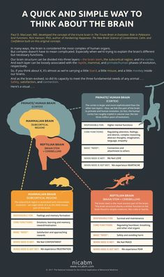 Quick and Simple Way to Think about the Brain we created an infographic based on the work of Paul D. MacLean, MD and Rick Hanson, PhD that you can share with your clients. (Please feel free to make a copy to give to them. Brain Anatomy, Anatomy And Physiology, Triune Brain, Brain Facts, Brain Science, Life Science, Computer Science, Science Education, Physical Education