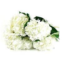 Hydrangea - White - 20 Stems - Sam's Club