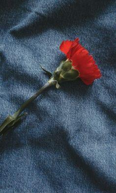 It's not rose smsoskwoakwos  #aesthetic #tumblr #aesthericflower #floweraesthetic #tumblrflower #flowertumblr #flower
