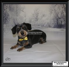 Lucy Small Breed, Dog Grooming, Dogs, Animals, Animales, Animaux, Pet Dogs, Doggies, Animal