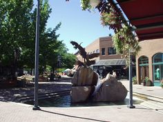 Fort Collins, Co.