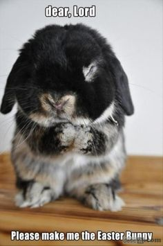 Funny bunny ... PS: Learn how to earn $100-$500 or more Daily. Click on the picture or the link bellow to find out how! http://linkprosperity.com/AtHomeIncomeProviders