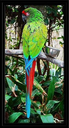 Full Length Military Macaw | Flickr - Photo Sharing!