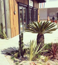 植物好きにはたまらない スポットですね #アガベ#多肉植物#サボテン#agave#succulent #botanical by take_1984 March 15 2016 at 12:13AM