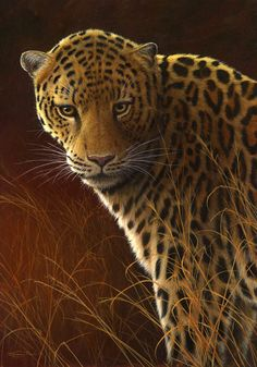 leopard by Jeremy Paul