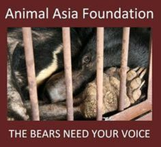 "HALLELUJAH!!!!!!!!!!!!!!!!!!!!!!!!!!!!! ""Hopes for an end to China's bear bile farms have been boosted as Chinese manufacturer Kaibao Pharmaceuticals announced it has successfully synthesised a substitute for use in traditional medicine."" ""Animal welfare charity Animals Asia is calling it a step that could eventually save thousands of protected moon bears from farms."""