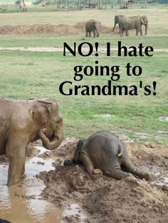 """""""Baby elephants throw themselves into the mud when they are upset, like a temper tantrum."""" hahaaa Way to cute and funny. Just like children do when they are upset and have temper tantrums. At least they are being like typical kids. Baby Animals, Funny Animals, Cute Animals, Baby Elephants, Elephants Playing, Wild Animals, Beautiful Creatures, Animals Beautiful, Elephas Maximus"""