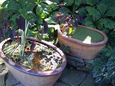 Water plants in stone pots