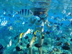 Ambergris Caye made the 10 top snorkeling attractions list