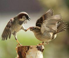 belas imagens - cuteanimalsaww: - até mesmo os pássaros machos...