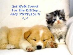 Get Well Soon Photo:  This Photo was uploaded by Git-R-Done_LTCG. Find other Get Well Soon pictures and photos or upload your own with Photobucket free i...