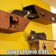 My cats need these. Not that they're not already spoiled enough.