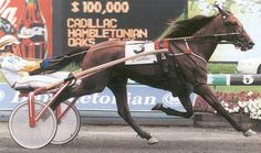 Moni Maker - Two-time Horse of the Year in  1998-99 for Hall of Famers Wally Hennessey & Jimmy Takter