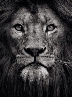 Resultado de imagen para lion face black and white