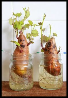 Actividades para Educación Infantil: EXPERIMENTO: crecen las plantas comestibles