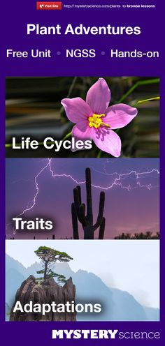 Complete hands-on Plants unit for teaching about Life Cycles, Traits, & Adaptations. For grades 3. Meets Common Core and Next Generation Science Standards (NGSS).