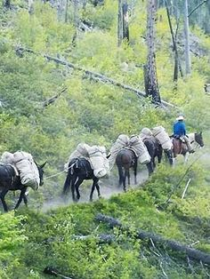 Elm Outfitting & Guide Training offer the highest quality hunting guides at the most affordable rates. Camping Packing, Go Camping, Hunting Guide, Cowboy Up, Donkeys, Running Away, Best Memories, Training Programs, Hiking Trails