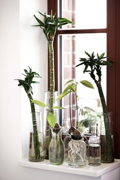 stylist design house plant seeds. STUFF PACK  References for Concept Artists Page 2 Avocado Plant From SeedGrow Table of Contents Holidays Abroad Oak tree Verandas and Stylists