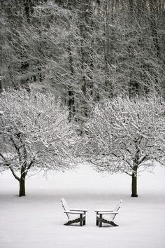 Snow covered silence