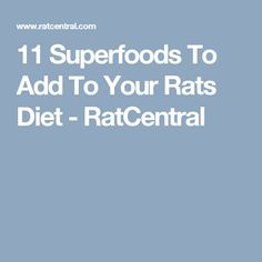 11 Superfoods To Add To Your Rats Diet - RatCentral