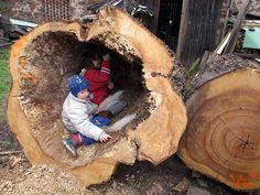 Lukáš Gavlovský – Padlé stromy