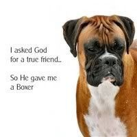 I asked God for a true friend, so He gave me a Boxer