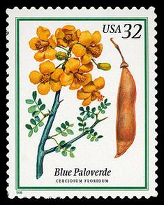 32c Blue Paloverde single