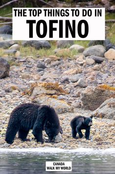 Tofino is packed with so many incredible experiences it can be hard to fit them all into one trip. We've here to help with the 12 best things to do in Tofino, including seeing wild black bears, whales, beautiful hikes, delicious food and much more. New York Travel, Rv Travel, Travel Luggage, Family Travel, Adventure Travel, Travel Destinations, Travel Tips, Vancouver Island, Travel Oklahoma