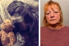 A Yorkie-Poo has been seriously injured in an attack by Staffordshire Bull Terrier in Grimsby.  The incident occurred at around 4.30pm on Monday at Fiveways, when a dog, believed to be a Staffordshire bull terrier-type,... (article has been removed).