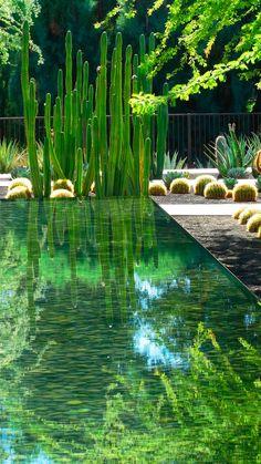 Construimos sistemas de tratamiento de agua residual, implantando sobre sustratos específicos, especies acuáticas o palustres. Estos #biofiltros nos permiten purificar aguas pluviales o grises, obteniendo como resultado un agua de gran calidad para riego.