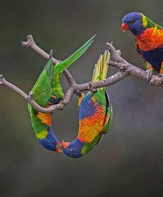140 Best Parrots images in 2019 | Parrot, Colorful birds