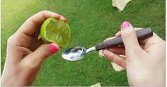 Conosciuto ed apprezzato fin dall'antichità, questo rimedio naturale è l'ideale per iniziare la giornata col piede giusto. Si tratta di un connubio di due elementi, già di per se formidabili, che assunti contemporaneamente sono un vero e proprio rimedio curativo per tutto l'organismo. Stiamo parlando dell'olio d'oliva e del succo di limone. Sappiamo già quale fonte di benessere sia l'olio d'oliva, così come conosciamo tutte le virtù del limone, ma quello che forse sottovalutiamo è l'unione…