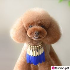 Ifashion.pet, is an online Web portal for Pet Retailers to purchase wholesale pet supplies pet collars & pet accessories for pet salons.