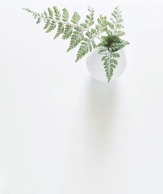 I n s t a g r a m house plants, green plants, leafy plants, white plants, negative Plantas Indoor, Cactus Plante, Minimal Photography, Plants Are Friends, No Rain, Hardy Plants, White Aesthetic, Jolie Photo, Green Plants