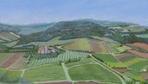 Painting Orvieto Olive Groves & Vineyards