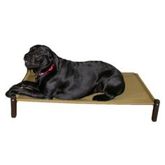 Chew Proof Dog Bed...for our chewer Zoe.....Kuranda Classic Cot - Dog Beds at Hayneedle