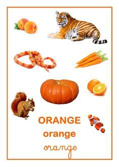 Référentiel d'Elisa Swaney orange